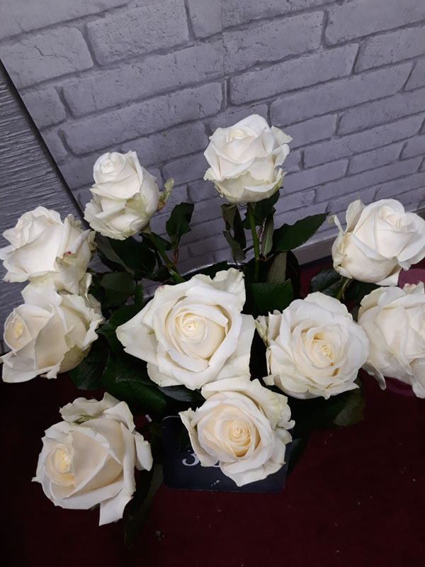 Roses blanches 70cm /pièce